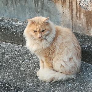 昨日は、にゃんにゃんにゃん=猫の日でした