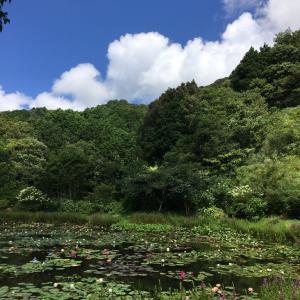 7/26(月)昨日は盛り沢山。母と山の公園〜夜のお散歩♪