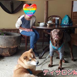 1日中ケーキ&紅茶withワンコ♡