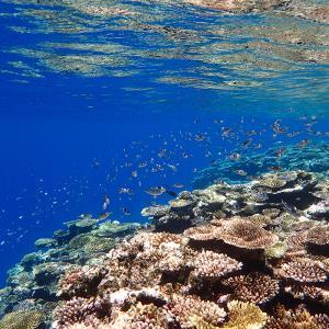 ■水景■ 浅い水中が好きな理由は透明なガラスから始まった