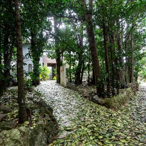 ■たびの邸宅 沖縄備瀬■ 備瀬のフクギ並木にまさか素敵なヴィラがあるなんて
