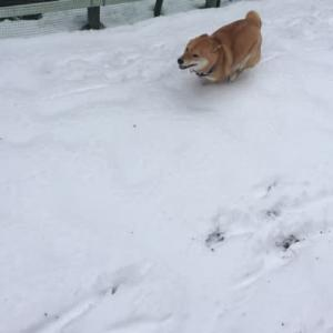 犬は喜び庭駆けまわり♫