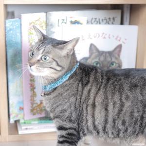 チーズスコーンとラミネートポーチ作りと、猫(+絵本)。
