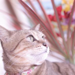 キャリアバッグと、花&猫たち。