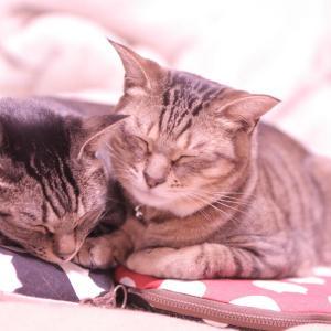 お部屋ミニバッグと、しっとりパウンドケーキと、猫たち。