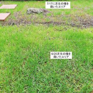芝生と花壇&差異がマイナス10MWh