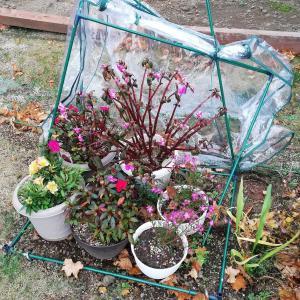 風対策(冬に備える)