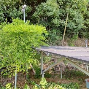 あ~パネルに竹が~(太陽光発電1号基)