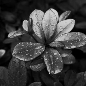 6/19  梅雨の一時モノクロ(GRⅡ)