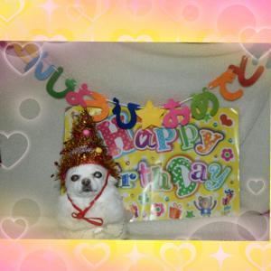 パールちゃん ☆誕生日☆