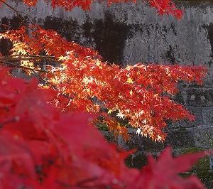 東京に住み何年???? まだまだ知らない東京たくさんある! 皇居に行ってきました