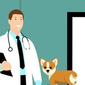 獣医さんにお話を聞く