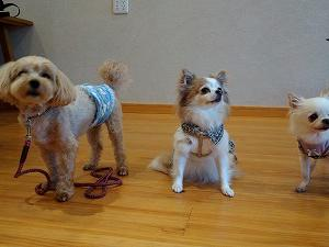 Tタッチは、タッチだけではなく、愛犬と向き合う気持ちもとても大切です