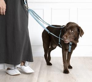 愛犬と楽しくお散歩 リードの使い方を知ると、安心できる♪