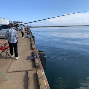 20210910小樽うまや岸壁釣果情報