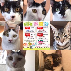3月28日(日)保護猫ちゃんの譲渡会です!
