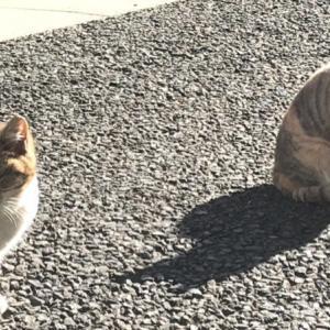 猫の道路への飛び出し