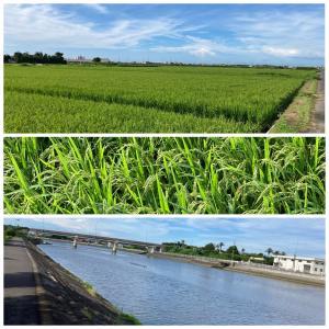 田んぼ、川、海