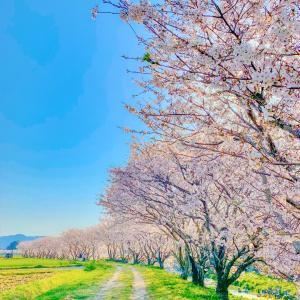 春の撮影会について