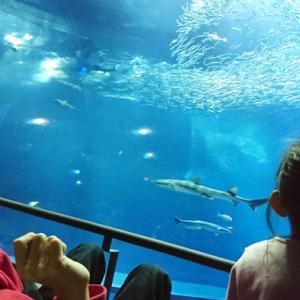 水族館、大好き♪