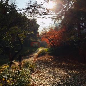 【sunny】帯同生活を変えた体験