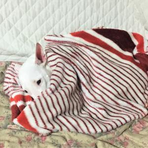 たまちゃん、寒いね~(*_*;