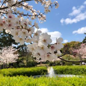 それでも桜は咲いてくれた