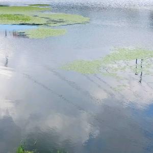 瓦曾根溜井の川面