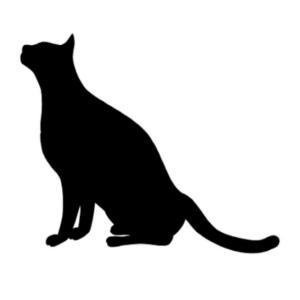 可哀想な黒猫