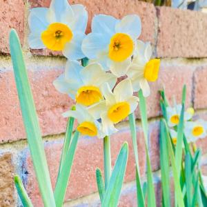春の便りはまだまだ遠い