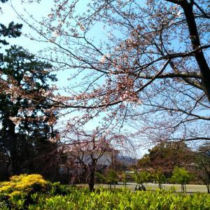 2020年3月26日(木曜日)小田原にて