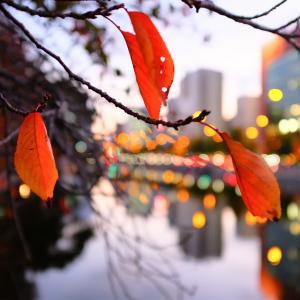 2020年11月7日(土曜日)は、暦の上ではもう立冬