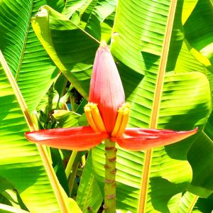 【Days in Kauai】Lihue, Kapa'a & Wailua
