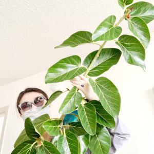 バニヤンツリーの枝