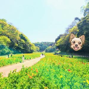 神奈川県横須賀市にある公園、くりはま花の国♡ 入園無料♪