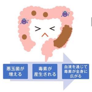 腸内環境と肌荒れの関係