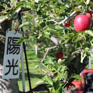 群馬県沼田市のリンゴ園に出かけてきました。