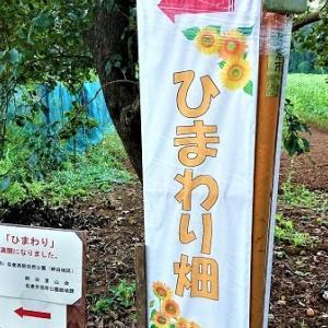 サイクリング (仮称)佐倉西部自然公園 ひまわり畑