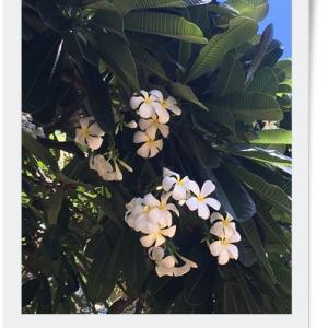 初ハワイに行ってきました♪
