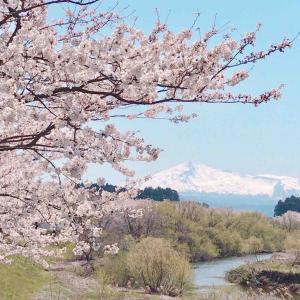 桜と温泉~金浦温泉~