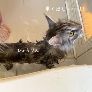 ウナギ猫レムち