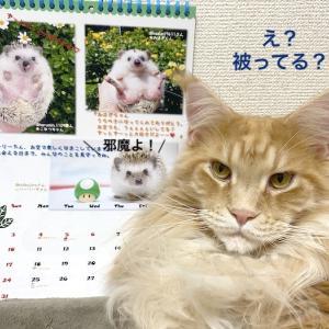 可愛いカレンダーが届きました!
