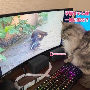 画面の向こう側の子猫ちゃん