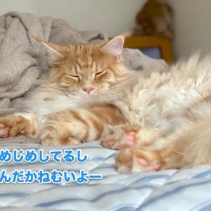 眠さ限界のオリーとハッスルオリー