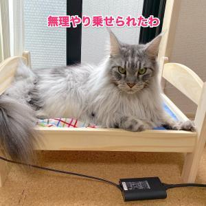 イケアの猫ベッドを買ってみた