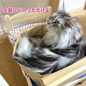 レムちもイケアの猫用ベッド使ってくれた?