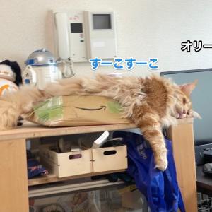 ザ・リッツ・カールトン東京に泊まってきた&顔が破れたAmazon君