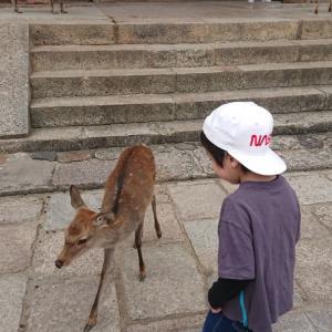 キャンカーショーのあとは奈良県鹿ツアー❗東大寺→春日大社へ~