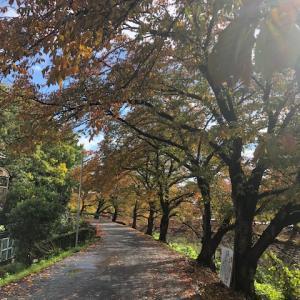 紅葉が綺麗な季節になりました♪近隣ではおふさ観音バラまつりも開催中。