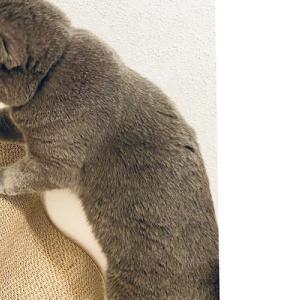 オシャレな猫用爪研ぎがやってきた! ポップでレトロ、楽しめる工夫がたくさん♪